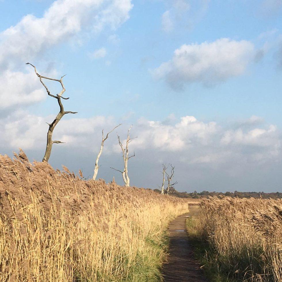Snape path